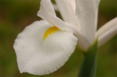 Binfordsflower